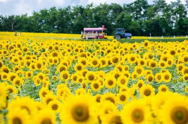 Top 3 best blossom spots in Hokkaido